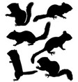 collection of silhouettes of chipmunks vector image vector image