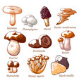 edible mushrooms hand drawn vector image