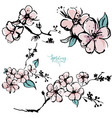 springtime apricot blossom hand drawn sketch vector image vector image