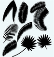 Collection set of palm leaves vector image vector image