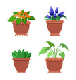 pseuderanthemum and muscari vector image vector image