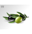 realistic olives branch vector image vector image