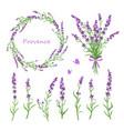set lavender flowers vector image vector image