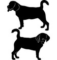 silhouette dog beagle breed vector image vector image