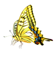 Yellow Butterly vector image vector image