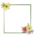 colorfull lily flowers in frame isolated on white vector image vector image