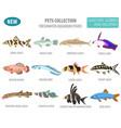 Freshwater aquarium fishes breeds icon set flat