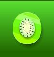 kiwifruit kiwifruit or chinese gooseberry half vector image