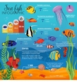 Sea Life Animals Plants Infographic vector image vector image