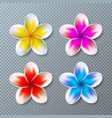 with colorful plumeria flower vector image vector image