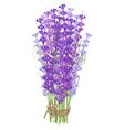 Bouquet of lavender vector image
