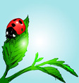 Colored hand sketch ladybug vector image vector image