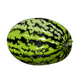 hand-drawn sketch watermelon in color isolated vector image vector image