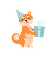 shiba inu dog in party hat holding gift box cute vector image vector image