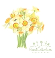 A bouquet of watercolor narcissus vector image