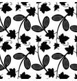 ecballium decorative floral seamless pattern vector image
