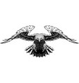 flying big eagle vector image