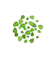 flying green leaves on white background spring vector image vector image