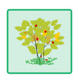ladybird on twig card vector image vector image