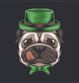 pug dog head st patricks day vector image vector image