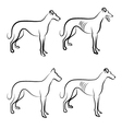 Greyhound dogs logo vector image