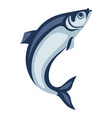 herring fish pacific sardine vector image vector image