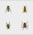 realistic insect housefly tarantula and other vector image