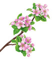 flowering branch1 vector image vector image