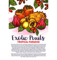 fruits exotic tropical fruit sketch poster vector image vector image