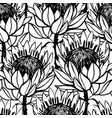 ink hand drawn protea flowers seamless pattern vector image