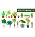 potted plants set indoor home office vector image vector image