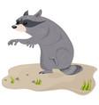 raccoon isolated cute cartoon character vector image