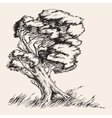 Strong wind tree hand drawn vector image
