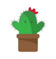 cactus cartoon character girl blossoming on white vector image