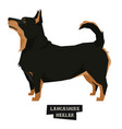 dog collection lancashire heeler isolated object vector image