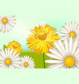 spring daisy flowers dandelions background vector image
