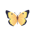 butterfly yellow color vector image vector image