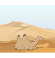 camel stands in the desert vector image vector image