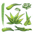 colourful set aloe vera elements vector image vector image