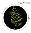 Cypress sprig vector image vector image