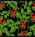 dogrose seamless pattern black background vector image
