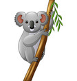 koala on a tree branch vector image