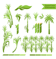 Sugar cane decoration elements vector image vector image