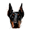 doberman head portrait from a splash watercolor vector image vector image