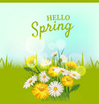 hello spring a bouquet of daisies flowers vector image vector image