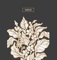 nature template botanical art line design coffee vector image