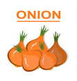 onion isolated on white background vegetables vector image vector image