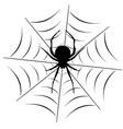 spider on the web vector image
