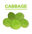 cabbage isolated on white background vector image vector image