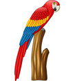 macaw on a branch vector image vector image